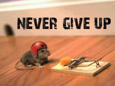 mouse with hard hat